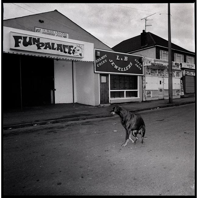 Dog in Isle of Shepp